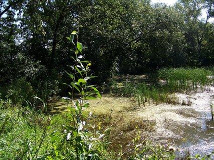 FOTKA - projížďka dnes na kole_rybník
