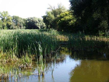 FOTKA - projížďka dnes na kole-opačná strana rybníka