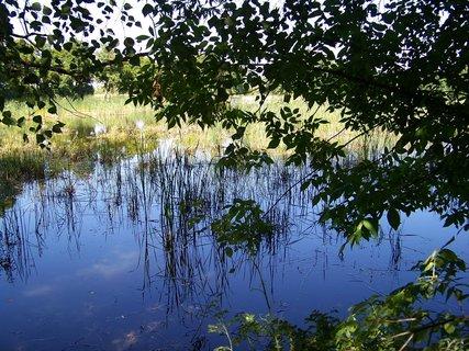 FOTKA - včerejší vyjížďka na kole_rybník Vestec, u břehu..