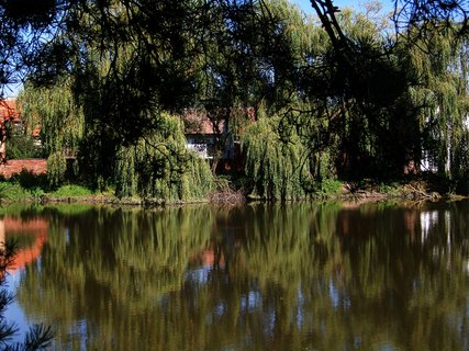 FOTKA - v�erej�� vyj��ka na kole_Hrn���e, odrazy strom�.....