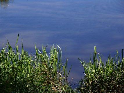 FOTKA - včerejší vyjížďka na kole_Hrnčířský rybník, rákosí na břehu