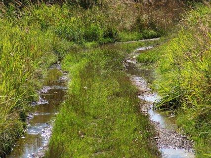 FOTKA - rybník v Šeberově, tady jsem s focením skončila...