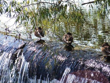 FOTKA - kačenky na vaně - rybník Šeberák