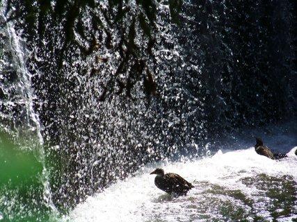 FOTKA - potápka se sprchuje ve vaně....