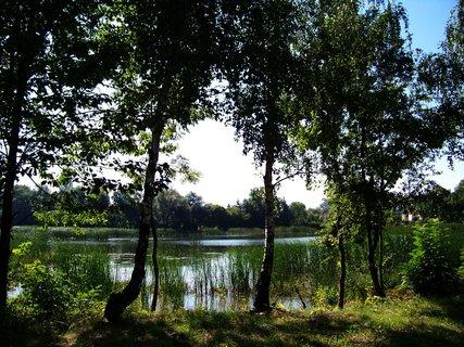 FOTKA - nedělní vyjížďka na kole - břízy u rybníka