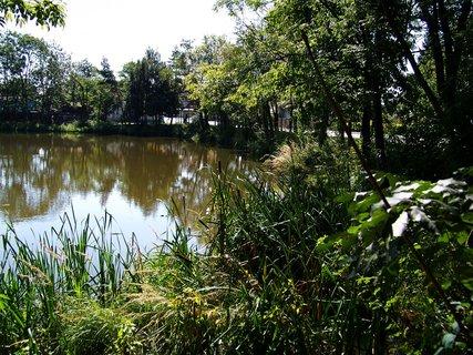 FOTKA - nedělní vyjížďka na kole - břeh rybníka od silnice