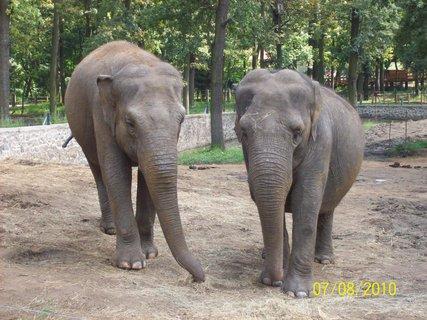 FOTKA - Dve slonie dámy