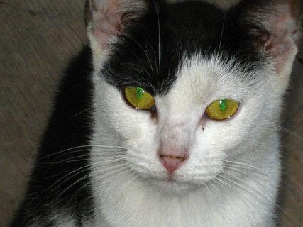 FOTKA - oči kočičí