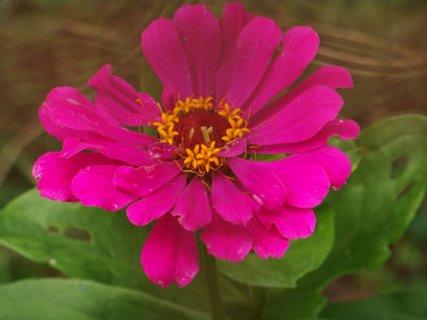 FOTKA - **květy v zahrádce...