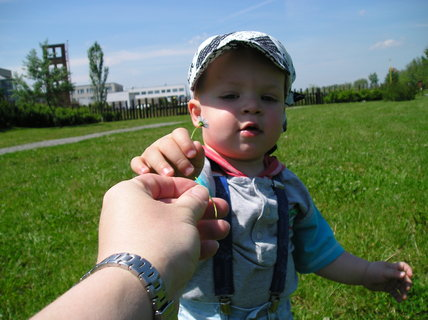 FOTKA - Hmm, krásná sedmikráska, maminko