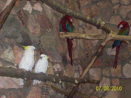 FOTKA - Papagáje...krásne boli