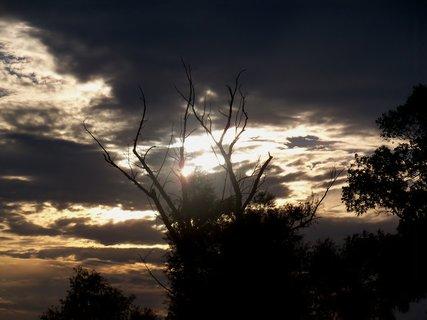 FOTKA - Můj oblíbený strom v západu slunce