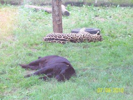 FOTKA - Gepard - oddych