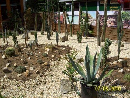 FOTKA - Kaktusový háj