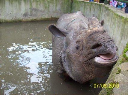 FOTKA - Takto sa chovajú nosorožce