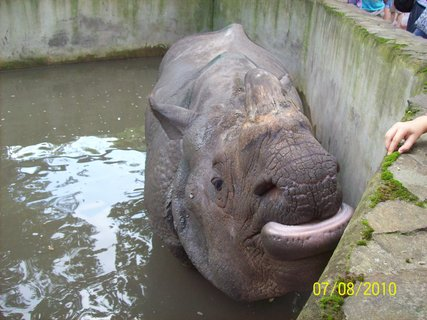 FOTKA - Takto sa chovajú nosorožce 2