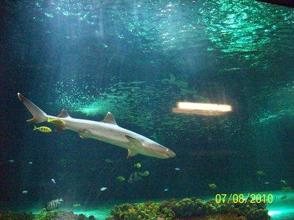 FOTKA - Žralok....