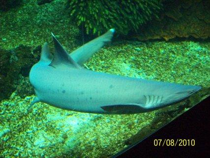 FOTKA - Žralok,.,.