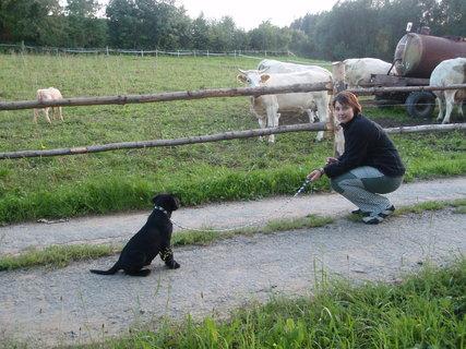 FOTKA - Dora vidí poprvé krávy