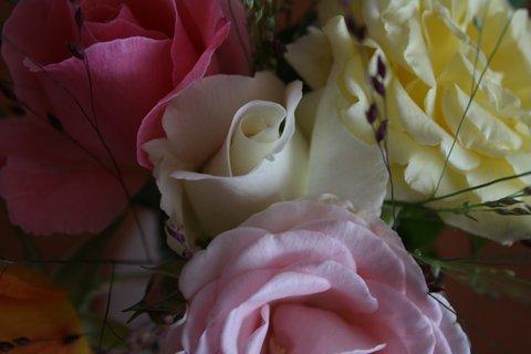 FOTKA - Růže XIV.