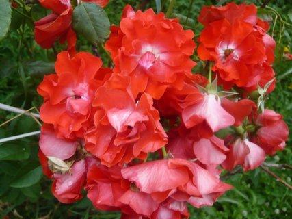 FOTKA - zahrada 2010....
