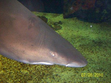 FOTKA - Kuk na žraloka
