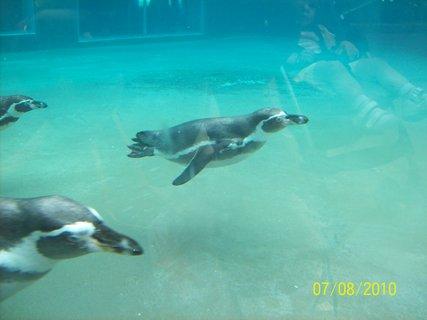 FOTKA - Tučniakýýýý