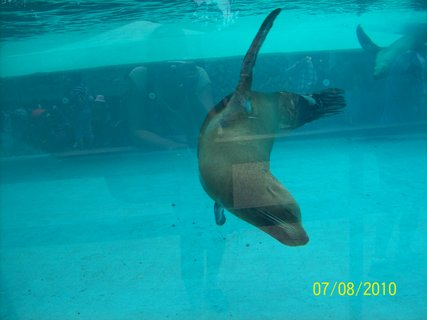 FOTKA - Tuleň - v bazéne