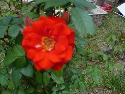 FOTKA - zahrada 2010..............