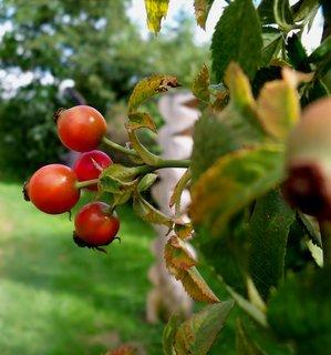 FOTKA - Začíná vládnout podzim