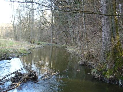 FOTKA - Potůček u lesa...