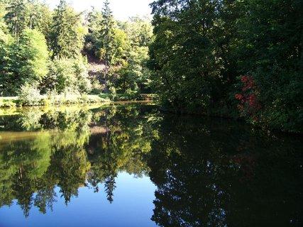 FOTKA - sobotní procházka - odraz stromů