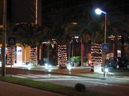 FOTKA - Ozdobené palmy