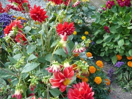 FOTKA - zahrada 2010  ..