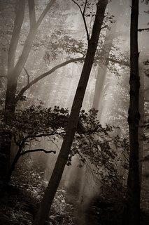 FOTKA - Paprsky v lese