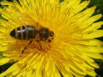 FOTKA - zahrada 2010  ,,,,,