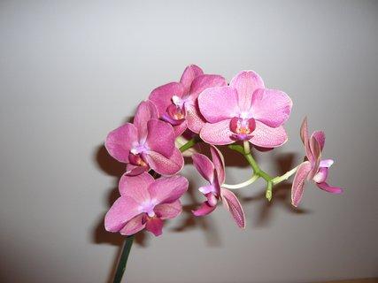 FOTKA - orchidejka