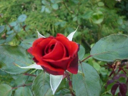 FOTKA - zahrada - 2010..........