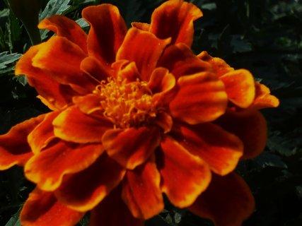 FOTKA - zahrada - 2010...............