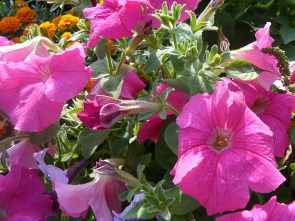 FOTKA - zahrada 2010  ,,,,,,,,,,,,,,