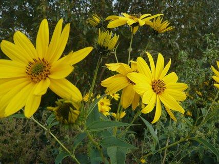 FOTKA - zahrada - 2010....................