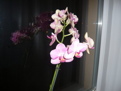 FOTKA - zahrada - 2010......................