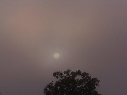 FOTKA - ranní procházka v mlze - slunce