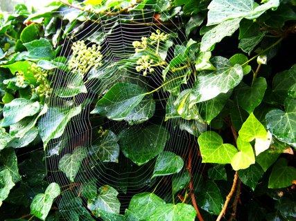 FOTKA - mlhavé ráno - pavučina