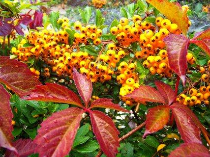 FOTKA - ranní procházka - podzim se pomalu blíží ..
