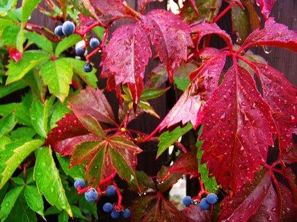 FOTKA - ranní procházka - podzim se pomalu blíží,,