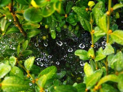 FOTKA - ranní procházka - pavučiny po dešti .,,,.