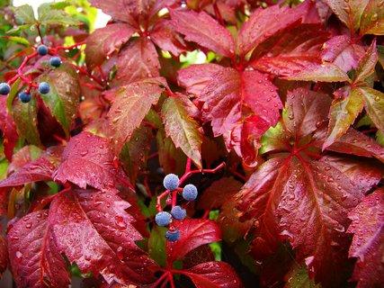 FOTKA - ranní procházka - podzim se pomalu blíží ..,...
