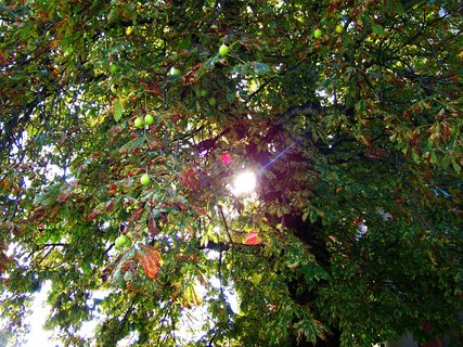 FOTKA - sluníčko skze kaštan
