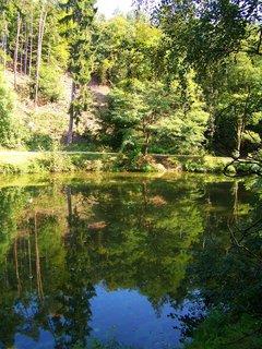FOTKA - rybník - odrazy.,,,,,,